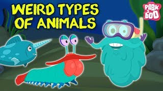 Weird Animals In The World - The Dr. Binocs Show |  Best Learning Videos For Kids | Dr Binocs