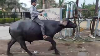 Jignesh Kaviraj - Hath Ma Chhe Whisky (VIDEO)| Bewafa Sanam Funny Edition