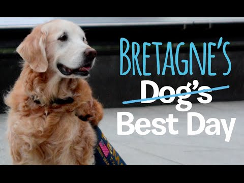 Xxx Mp4 Last 9 11 Search And Rescue Dog Bretagne Comes Back To NYC DOGS BEST DAY 3gp Sex