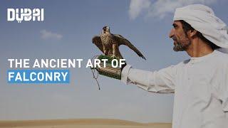 Art of Falconry in Dubai
