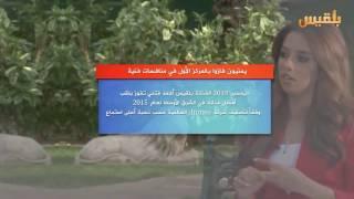 في أقل من دقيقة شاهد اليمنيين الأكثر نجومية  في البرامج العربية
