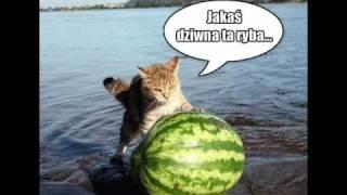 Zabawne zdjęcia kotów ze strony kotburger.pl