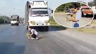 Brave Woman! Rescue Kitten On The Road