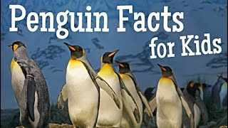 Penguins For Children | Classroom Facts Video