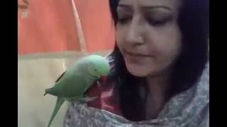 Parrot Talking with Human in Bangla