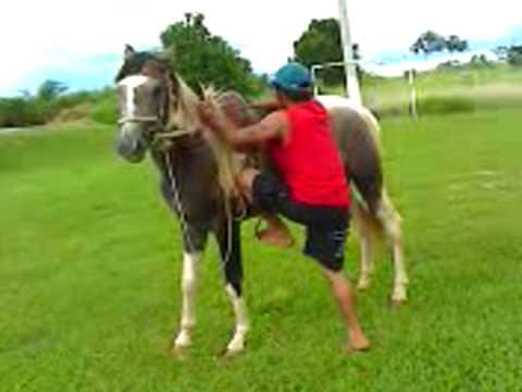 tombo de cavalo