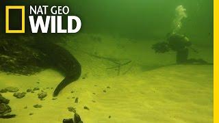 Underwater Croc Cams | Croc Labyrinth