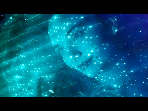 Xxx Mp4 Deftones Sextape Official Music Video 3gp Sex