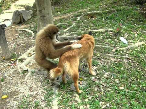 Xxx Mp4 Monkey VS Dog 3gp Sex