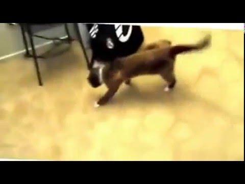 Xxx Mp4 Funny Animal Videos Mp4 3gp Sex