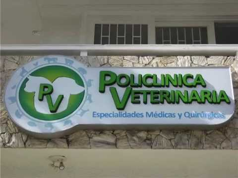 Ventajas de la esterilización ovh lateral en perras y gatas Policlínica Veterinaria Medellín.