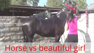 Horse 2017 - ONE Gilr vs horse Born pure love , Glad to close
