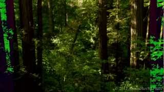 The Deep Forest (Short Film)