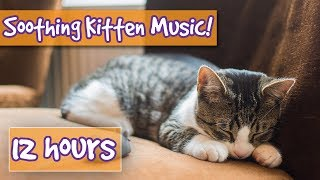 How to Make your Kitten Calm Down! Relaxing Music to Help Calm Your Cat, Kitten and Reduce Stress!🐱
