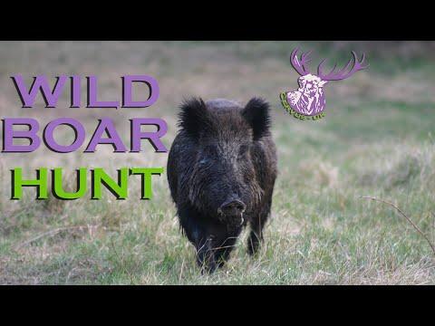 MEDAL CLASS CZECH WILD BOAR HUNT
