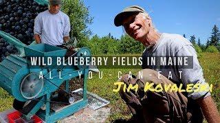 WILD BLUEBERRY BUFFET! Harvesting - Packaging - Selling (Jim Kovaleski in Maine)