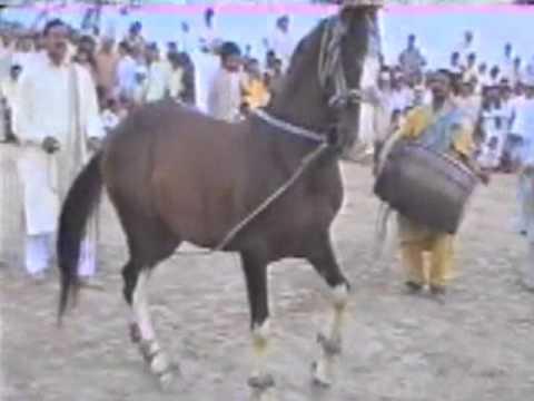 PUNJAB BEST HORSE DANCE