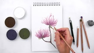 Drawing Flowers with Panpastel and Colored pencils