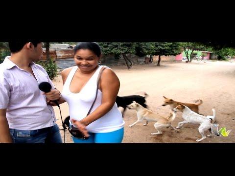 Pelea de perros interrumpe a periodista