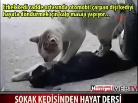 القطه الذي أبكت الملايين