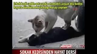القط الذي أبكى الملايين