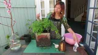 How to prevent root rot in potted plants