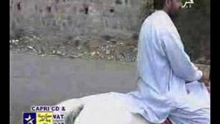 Zama Pa zra Jorawi Laarey - Azra Naz - Pashto
