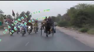 SYED INSAF RAZA HORSE(TAWANGAR) KHAR PUR SINDH