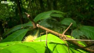 Ant Attack - Nature's Microworlds - BBC Four