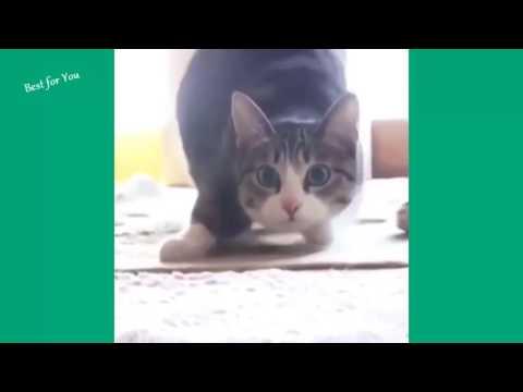 Video drole de chute, essaye de ne pas rire compilation ! mars 2016 5
