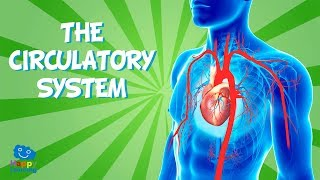 THE CIRCULATORY SYSTEM | Educational Video for Kids.
