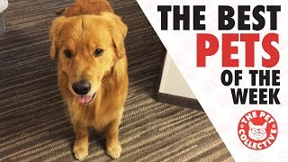 Best Pets of the Week Video Compilation | August 2017