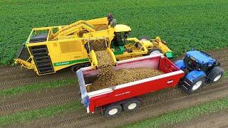 Potato Harvest   PLOEGER AR-4BX + Fendt & New Holland   Demijba / Van Peperstraten