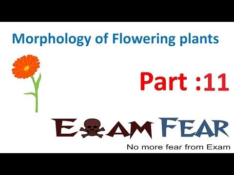 Biology Morphology of Flowering Plants part 11 (Sub-aerial stem) CBSE class 11