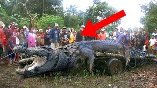 8 LARGEST Animals On The Planet!