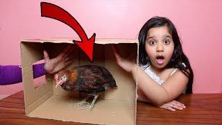 تحدي ايش الي في الصندوق !!! دجاجة في بيتنا ! what