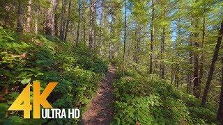 4K Nature Walk Relax Video | 1 Hour Virtual Forest Hike - Cedar Butte Trail