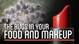 The Bugs in Your Food and Makeup | HTME: Cosmetics