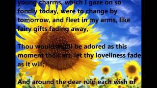 The Sunflower - Irish Traditional