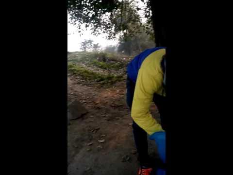 Releasing carp fish in ropar river