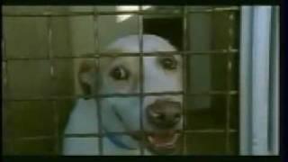 Pedigree Dog Adoption Drive