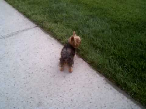 Chachi in search of Squirrels