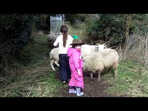 Xxx Mp4 Beautiful Children And The Sheep Xxx 3gp Sex
