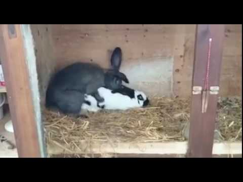Xxx Mp4 Rabbit After One Round Whatsapp Vidoes 3gp Sex