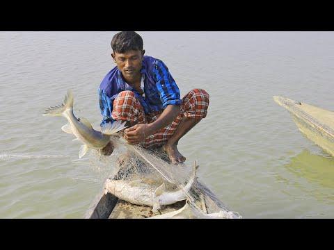 Xxx Mp4 Natural Fishing In Bangladesh Fish Catching 3gp Sex