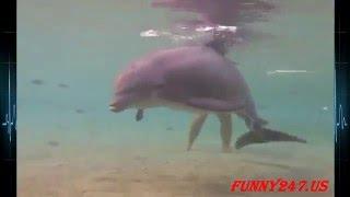 【感動】イルカの水中赤ちゃん出産シーン|Dolphin birth