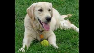 El diario de un perro (creando conciencia)