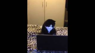 Pussy watching a porno