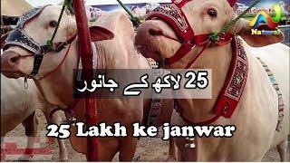 Karachi Cow Mandi     FTC Cow Mandi and Bakra Mandi    Eid ul Adha    Part - 2017