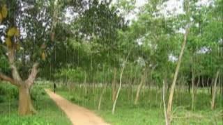 Tui Fele Ashesis Kare